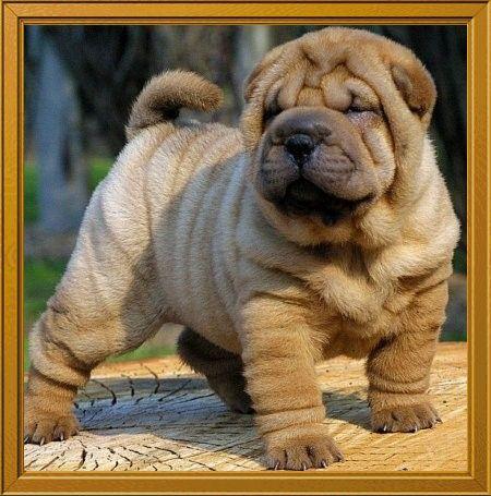 Mi pecera    (mi mundo): Perro